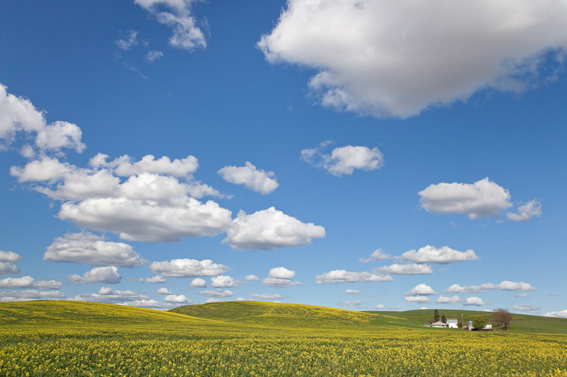 Washington; Eastern Washington; Washtucna; Palouse Hills; Canola fields