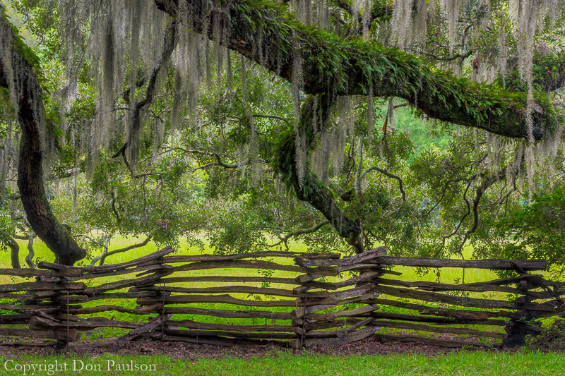 Running Trees, Magnolia Plantation, South Carolina