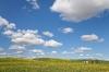 Washington; Eastern Washington; Washtucna; Palouse Hills; Canola fields