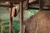 Inside the Barn, Peterson\'s Farm, Silverdale, Washington