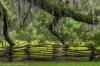 Running Trees, Magnolia Plantation, South Carolina