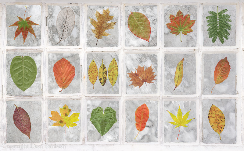 Leaf-Window Collage