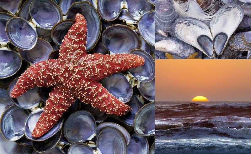 Sea Shore Collage
