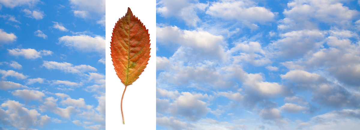 Sky and Leaf Collage