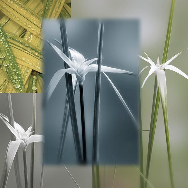 Star Grass Collage