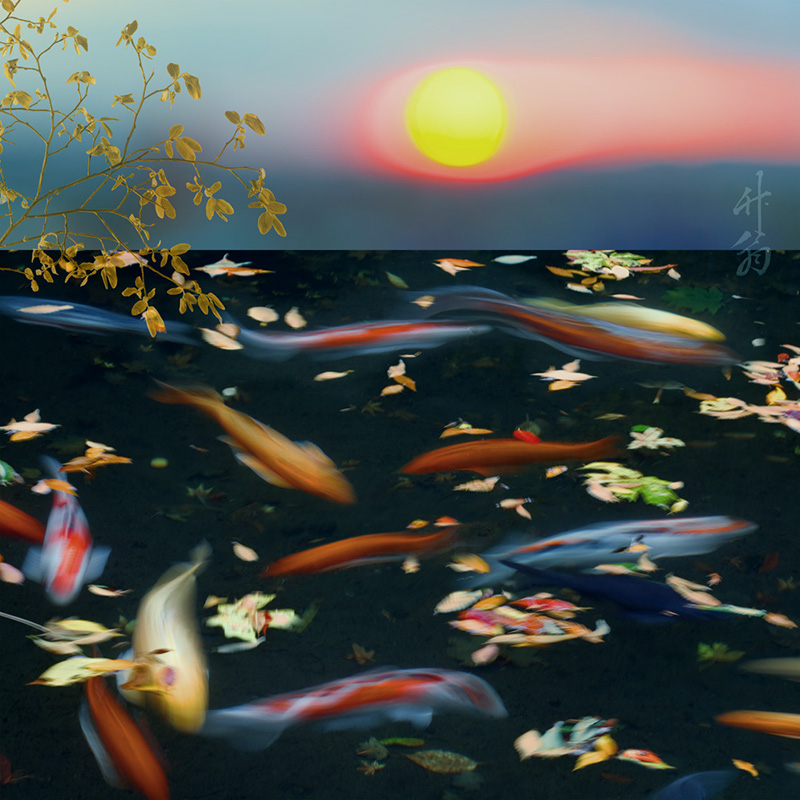 Sunset and fish collage