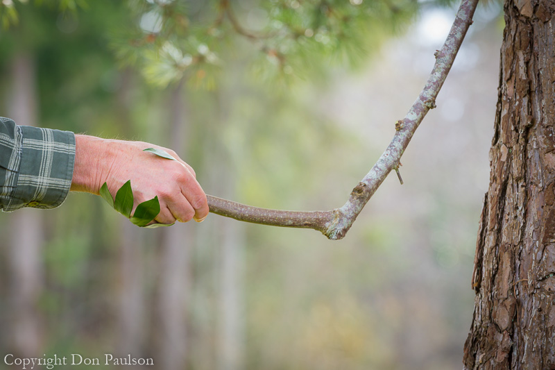 Handshake with a tree