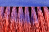 Bristle Brush - close up
