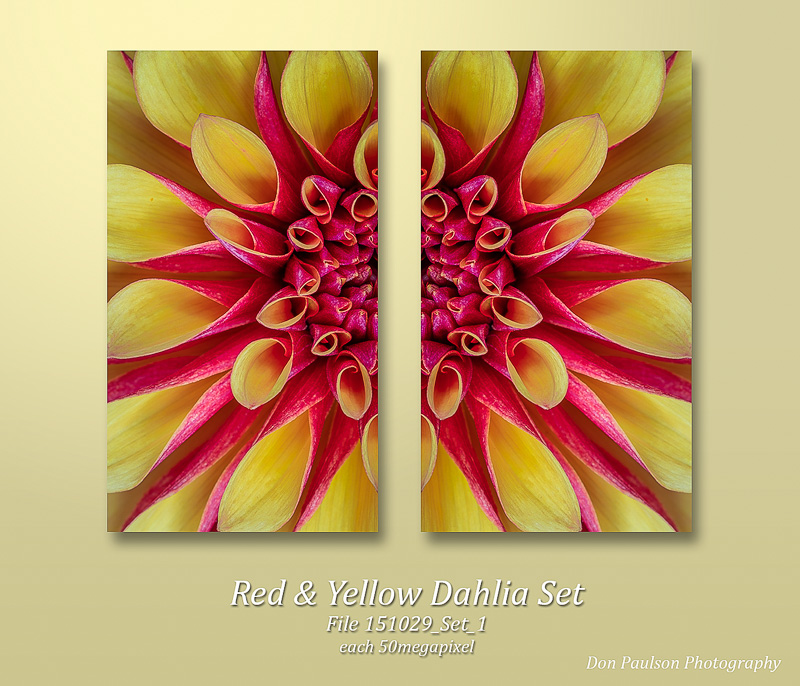 Red & Yellow Dahlia Set. Each image photographed at 50.6 Megapixel