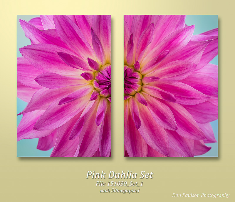 Pink Dahlia Set. Each image photographed at 50.6 Megapixel