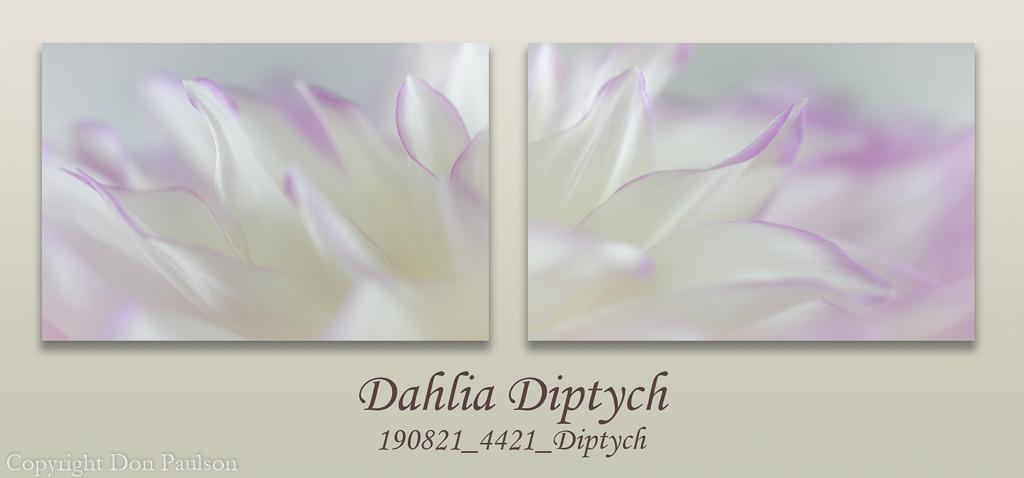 Dahlia Petals Diptych