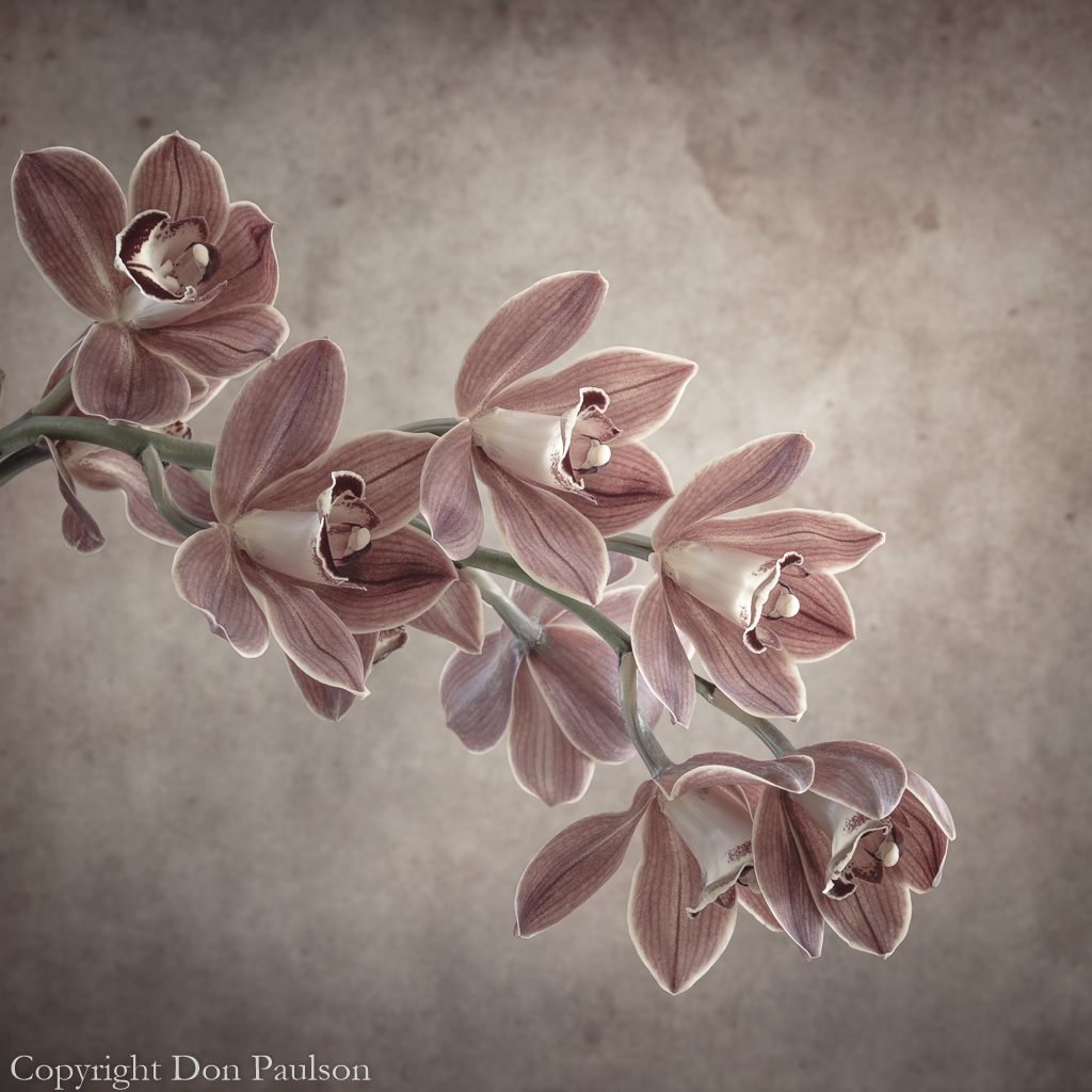 cymbidium orchid spray #4869