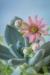 Succulent plants - 50.6 mp