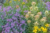 Colorful wildflower meadow (Close up)