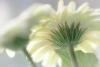 Spring Blossoms#1