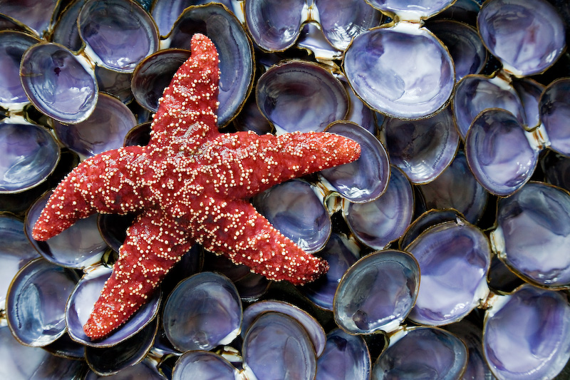 Starfish and Clam shells