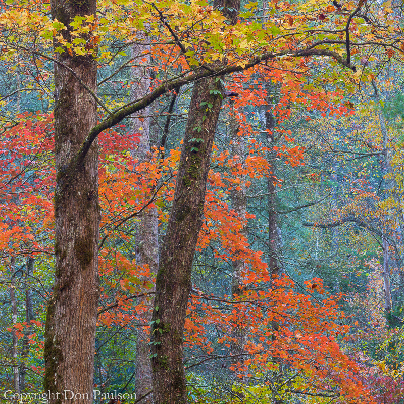 Hardwood forest, Tellico River, Tennessee