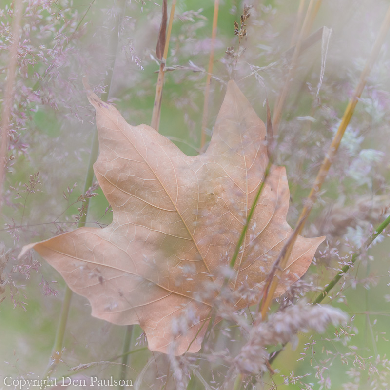 Leaf in Meadow