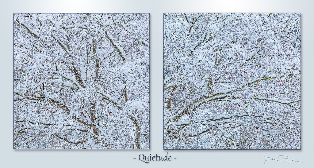 Snow covered tree limbs, Photographed at 50.6 Megapixels. Each photo sold separately