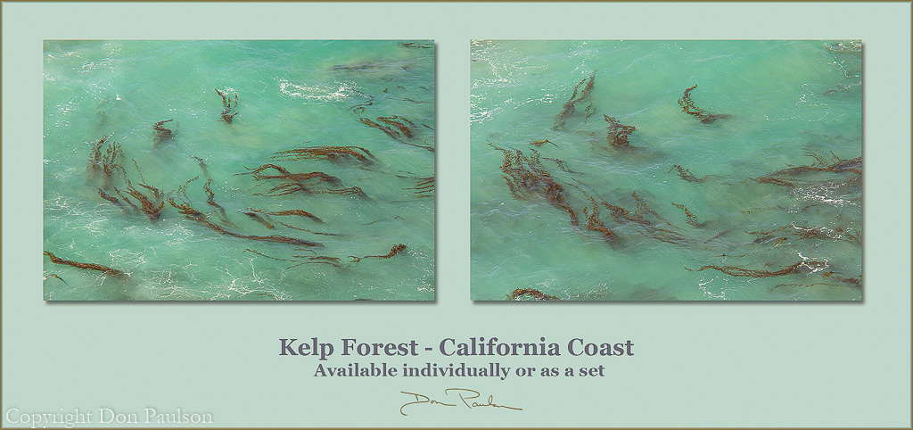 Kelp Forest - Available individually