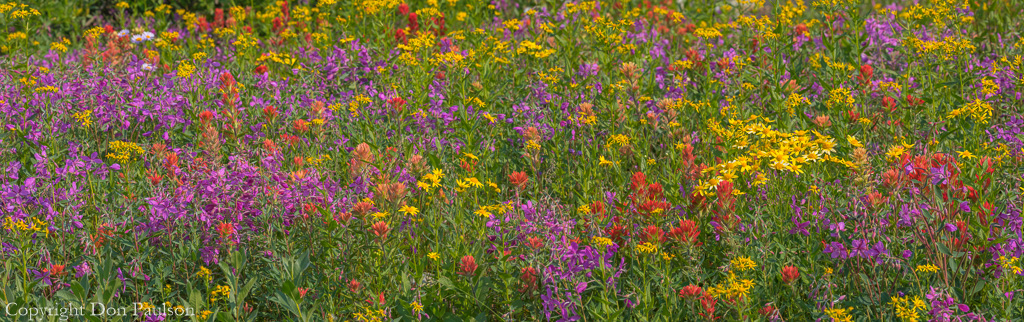 Colorful alpine meadow