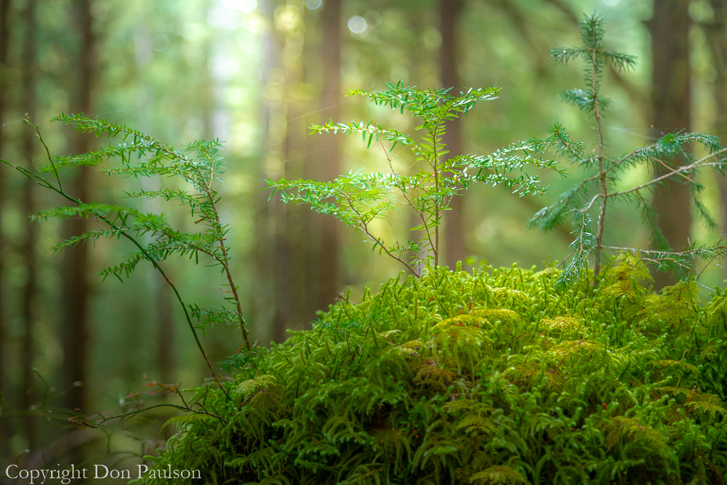 New Growth in an Old forest -