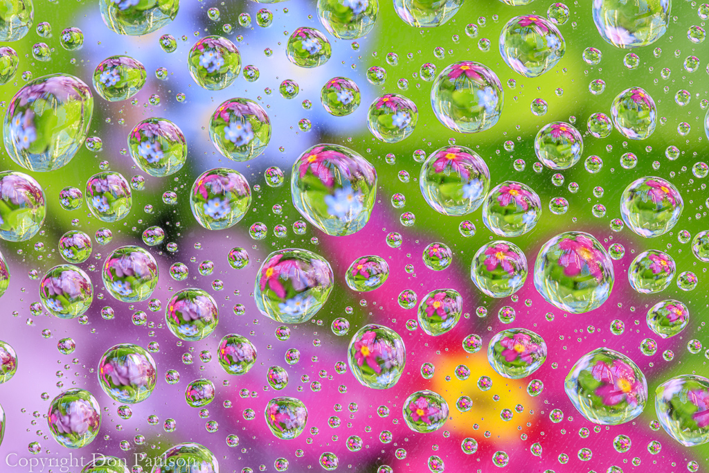 Flowers reflected in Water Drops #5385