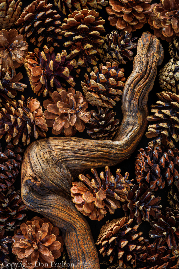 Pine Cones and Gnarled Branch