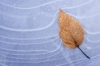  Leaf frozen in Ice, Washington