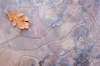  Leaf frozen in Ice, Arizona; Sedona