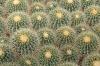 Cactus at Bach\'s Cactus Nursery, Tucson, AZ