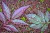 Leaves Floating on Duckweed