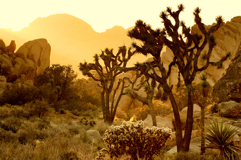 Sunrise, Joshua Tree National Park, California