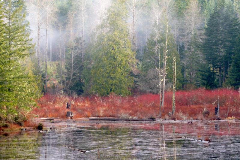 Beaver Pond, Belfair, Washington