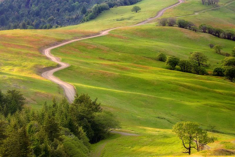 Bald Hills Road, Redwood National Park, California