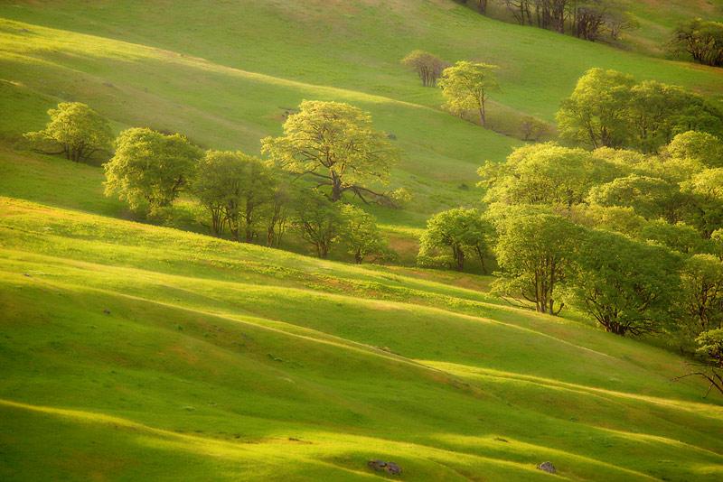 Bald Hills, Redwood National Park, California