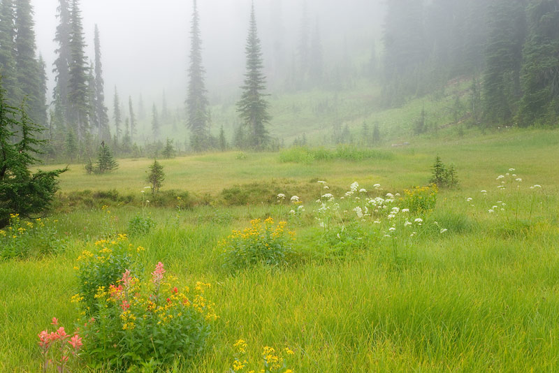 Canada; British Columbia; Revelstoke National Park
