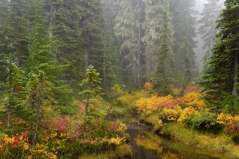 Fall Forest, Mount Rainier National Park