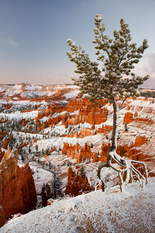 Rooted In Faith, Bryce Canyon National Park