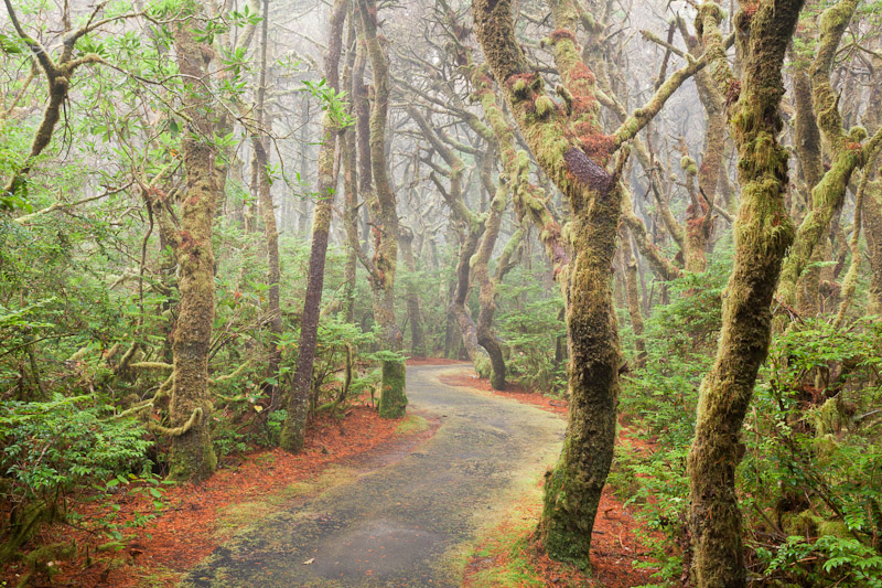 USA; Oregon; Carl G. Washburne State Park; trail through a foggy forest