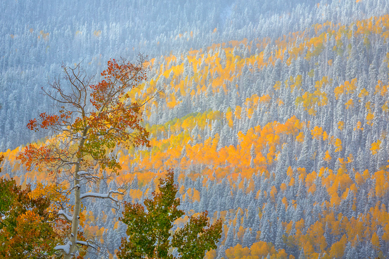 fall color, Cimarron Road, Colorado, near Owl Creek Pass