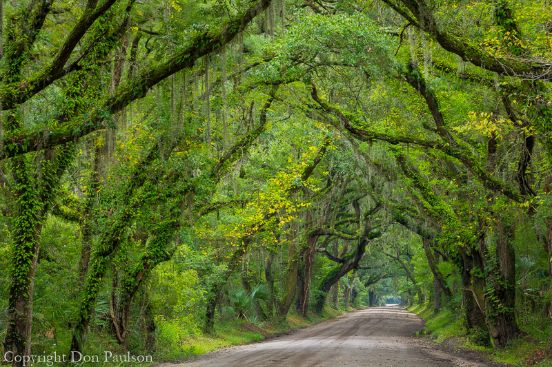 Oak trees over Botany Bay Road, Edisto Island, South Carolina