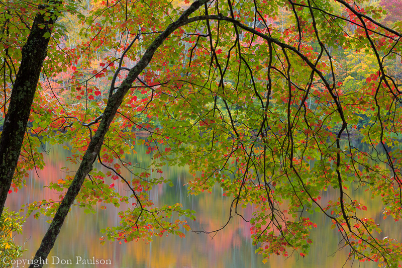 Maple over Lake, Blue Ridge Parkway, North Carolina