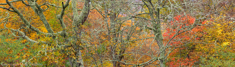 Hardwood Forest, Blue Ridge Parkway, North Carolina, High Resolution, Multi-image Panorama. 13371x 3854