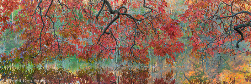 Wild cherry tree over Byrd Lake, Cumberland Mountain State Park, Tennessee, High resolution, multi-image panorama. 72 Inches x 24 inches @240dpi