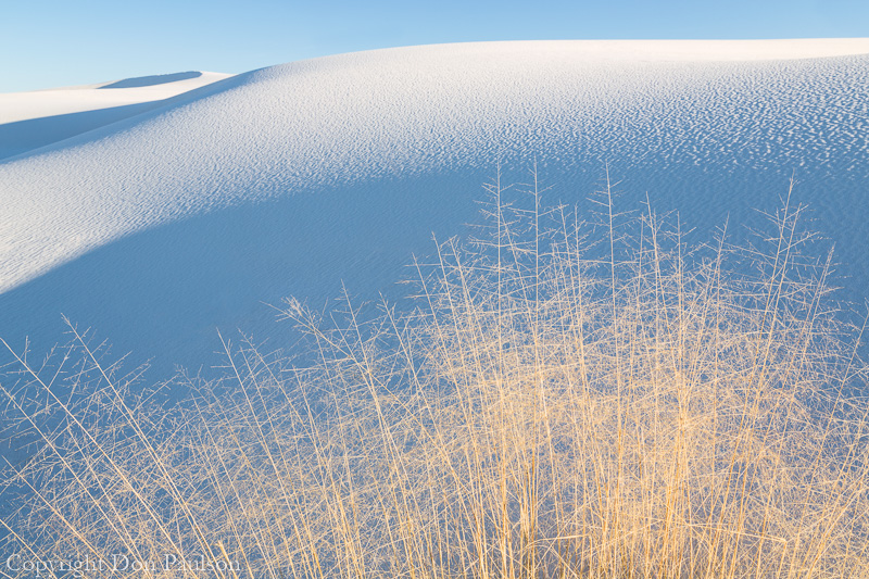 Fall Grassess, White Sands National Monument, New Mexico