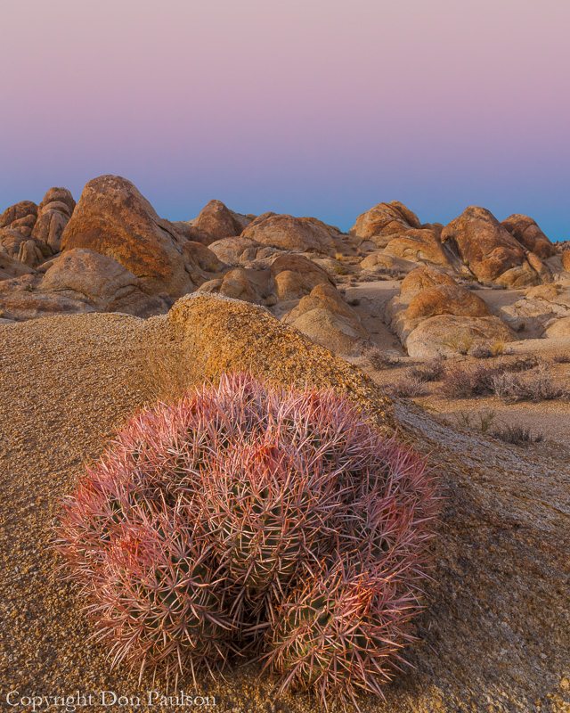 Cactus, Alabama Hills, California
