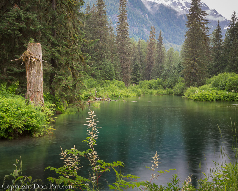 Alaska, Hyder, Tongass National Forest, Beaver Pond on Fish Creek
