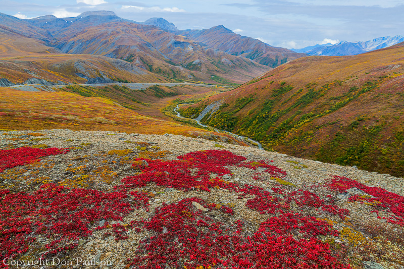 Fall color - Alaska, Dalton Highway, Brooks Range, near Atigun Pass