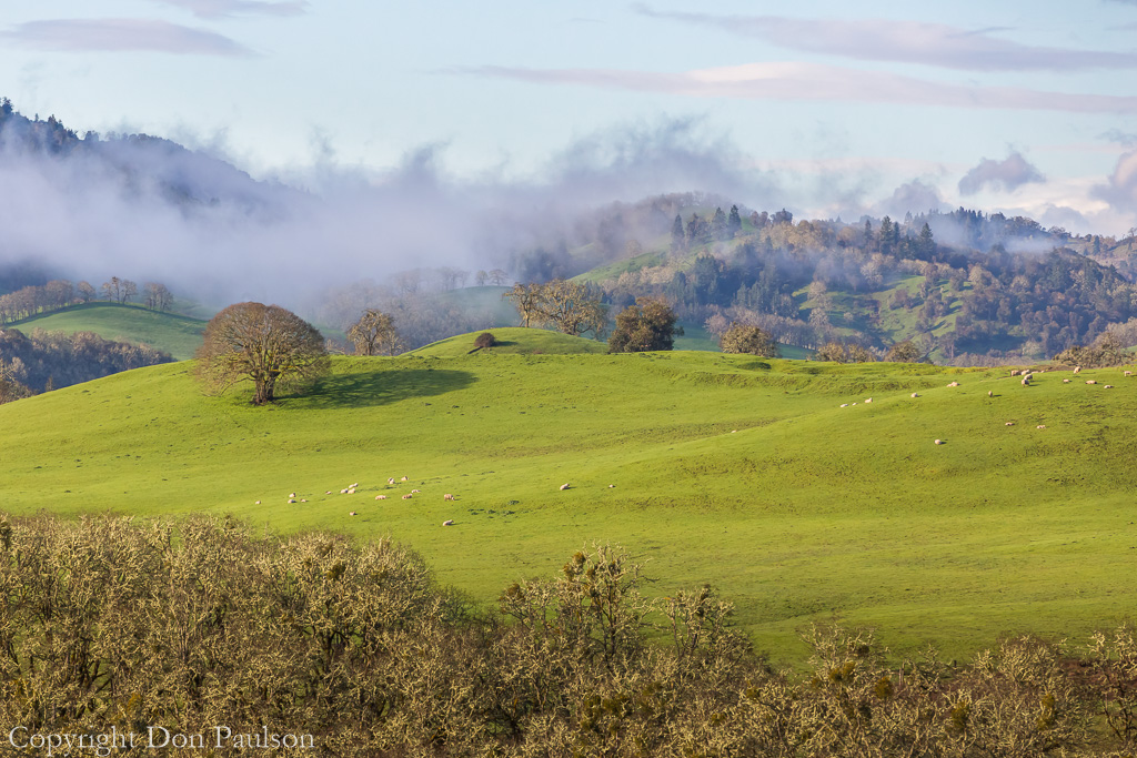 Oregon, Whistler's Bend County Park viewpoint, near Roseburg